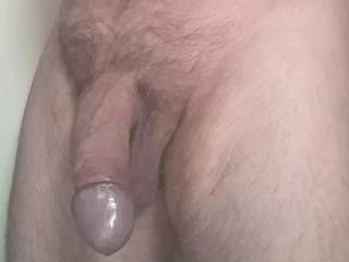 Willing cock, available for breeding.