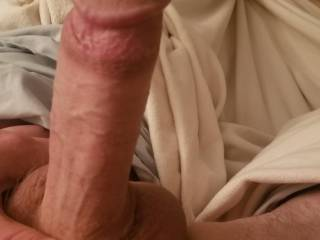 Morning Wood, would you want to suck it or fuck it?