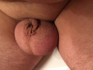 He does get to 2 and three quaters if an inch when hes erect