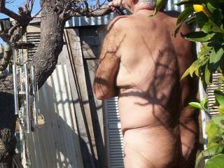 Pruning trees naked