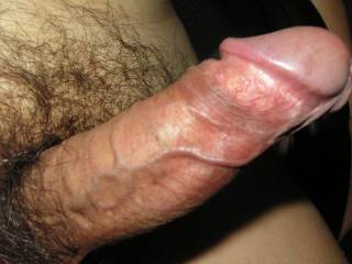 my horny cock close up